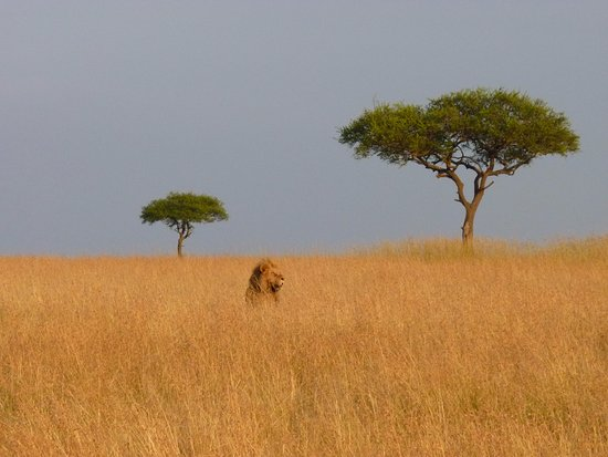 F. King Tours and Safaris - Day Tours: A view of the Mara