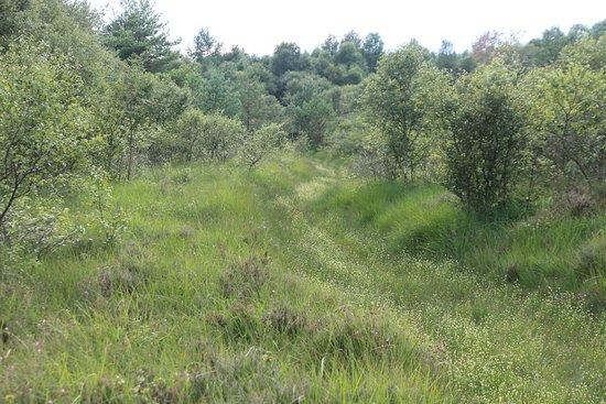Osterholz-Scharmbeck, Alemania: OHZ - Moor bei Niedersandhausen 5