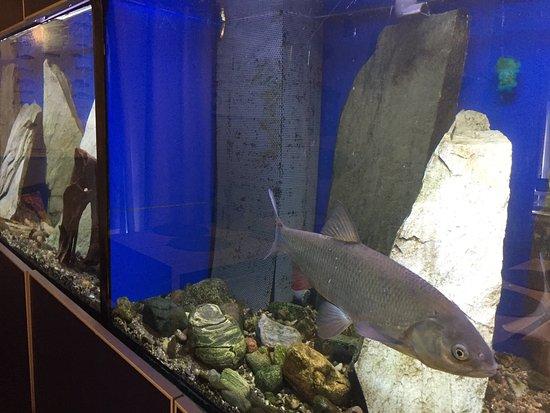 Kuusamon uistimen akvaario