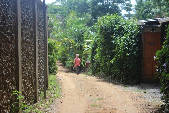 Dominical, Costa Rica: Pathway to Danyasa