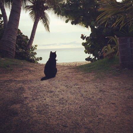 Tres Sirenas Beach Inn: photo0.jpg