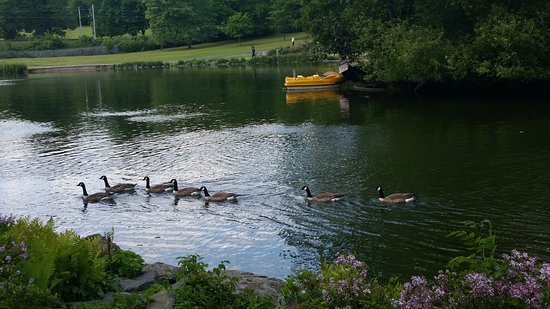 Handsworth Park: A little family on the lake