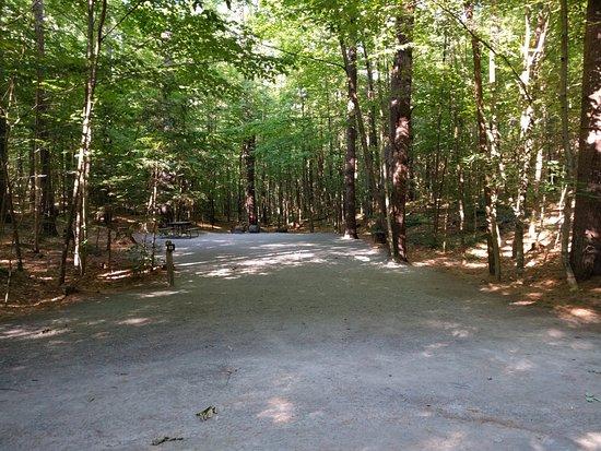 Jamaica State Park Campground: Site 28