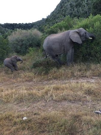 Kenton-on-Sea, Sudáfrica: Elephant and Calf