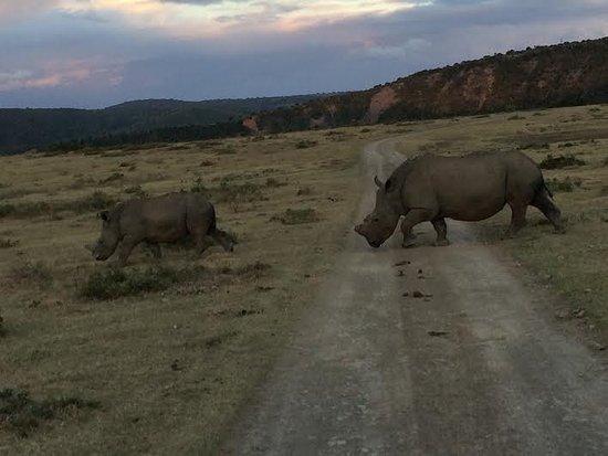 Kenton-on-Sea, แอฟริกาใต้: Rhino and calf