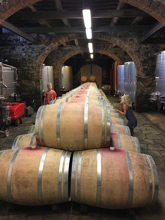 Vini Castelvecchi in Chianti: photo0.jpg