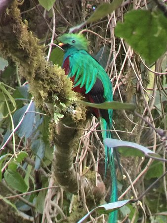 Dantica Cloud Forest Lodge : Quetzal