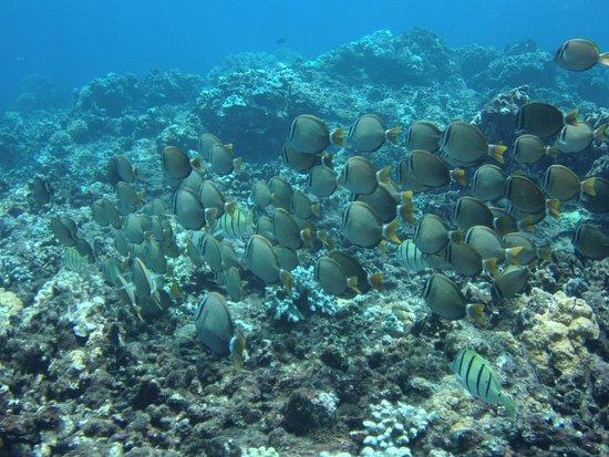 Pukalani, ฮาวาย: More fish