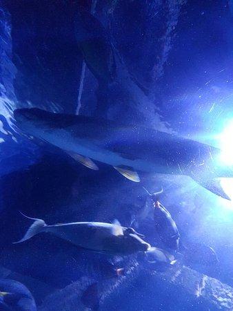 Downtown Aquarium: 20160728_150852_large.jpg