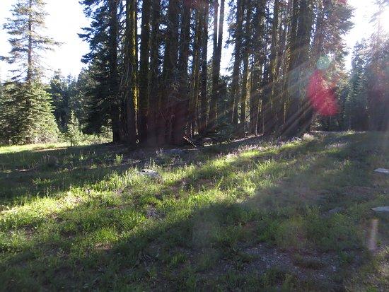 Foto Gold Lake Lodge