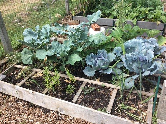 Leslie Science Center : Community Garden