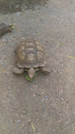 Huntsville, AL: You can feed the turtles!