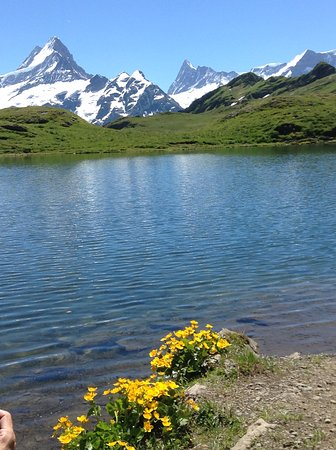 Grindelwald, Suíça: Calm and beautiful Bachalpsee in a July afternoon