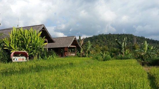 Munduk, Endonezya: 20160729_162532_large.jpg
