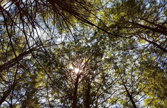Peterborough, NH: A walk through Sheiling Forest, May 2016