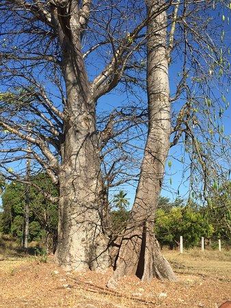 Mahajanga, Madagascar: photo4.jpg
