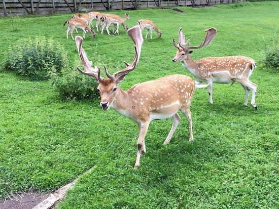 Park Dzikich Zwierzat Kadzidlowo