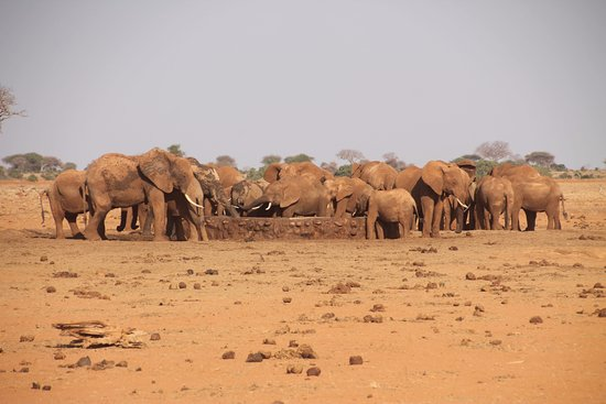 F. King Tours and Safaris - Day Tours: Elephants at the water hole - Tsavo East