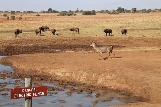 F. King Tours and Safaris - Day Tours: Water hole at Ashnil Aruba lodge - Tsavo East