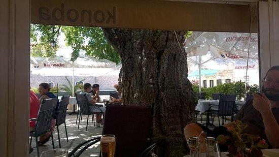 Ston, Kroatien: Der schöne Gastgarten bietet genügend Platz.