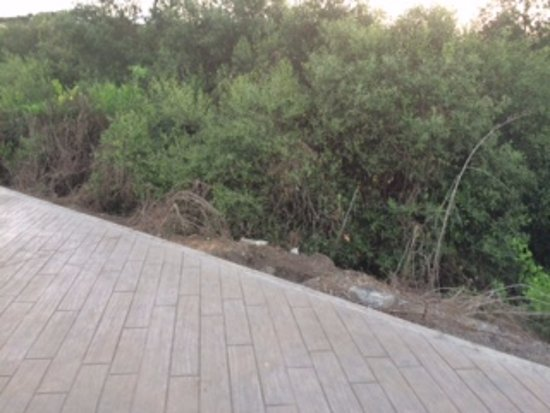 Navi Mumbai, Indie: Jewel - Track with Mangrove Views