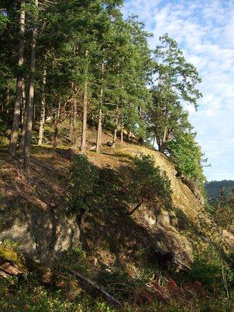 Fernhill Bed and Breakfast: Aussicht vom B&B Gelände auf den Wald