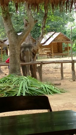 Provincia de Kanchanaburi, Tailandia: Gentle giants at Elephant Nature Park - Kanchanaburi