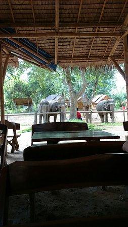 Kanchanaburi Province, Thailand: Gentle giants at Elephant Nature Park - Kanchanaburi