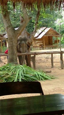 Kanchanaburi Province, Thailand: IMG-1469498107477-V_large.jpg
