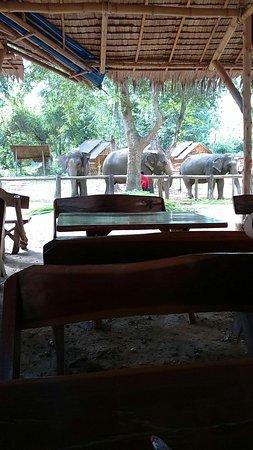 Kanchanaburi Province, Ταϊλάνδη: IMG-20160726-WA0000_large.jpg