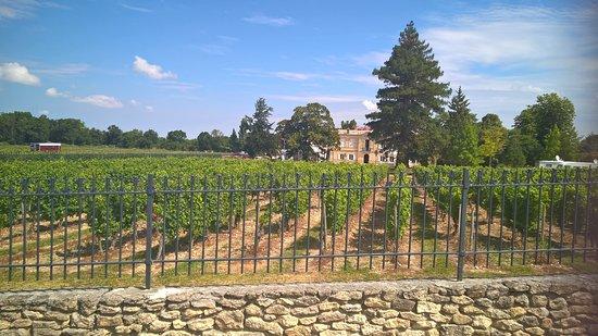 Château Marquis de Vauban: vignes