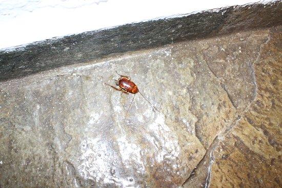 Trachilos, Griechenland: une des 4 blattes pris en photo