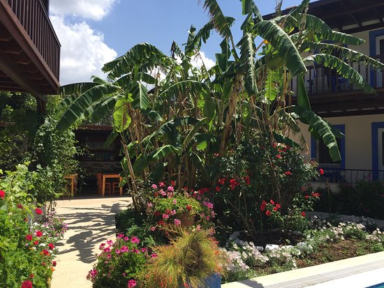 Paradise Garden Apartments