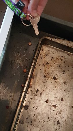 Ashville, NY: Mouse dropping and old food in oven drawer, found when looking for cookie sheet.