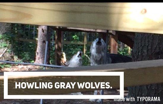 Adirondack Wildlife Refuge: photo0.jpg