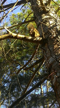 Pousada Aguia da Montanha: Avistamos esse esquilo, comendo amendoins, na ida para o café da manhã.