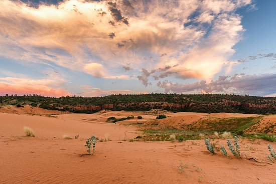 Coral Pink Sand Dunes State Park: Lovely at sunset