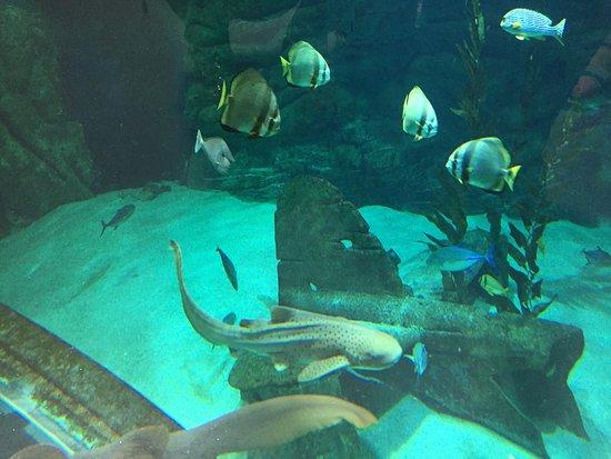dans le tunnel picture of seaquarium le grau du roi tripadvisor