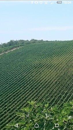 Take Me Out in Tuscany : Screenshot_20160730-180417_large.jpg