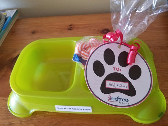 Fernie, Kanada: Personalized treats for our four-legged friends!