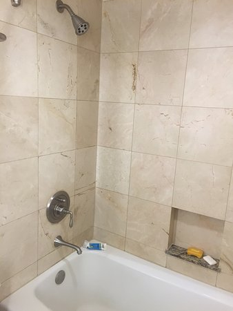 ザ ヒューストニアン ホテル、クラブ & スパ Picture