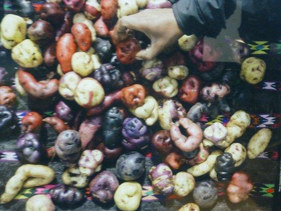 Blackfoot, ID: So many types of potatoes.