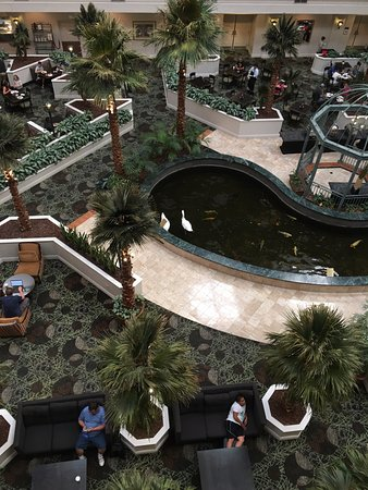 ‪‪Embassy Suites by Hilton Las Vegas‬: Swans swimming in the indoor Koi pond of the hotel lobby/atrium area‬