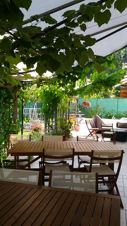 La Pierre Bleue : Terrasse ombragée sousla vigne