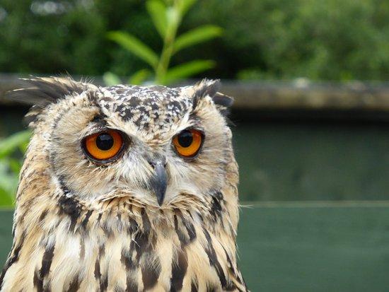 Screech Owl Sanctuary