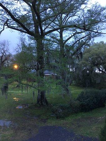 Madewood Plantation House : The Spanish Moss