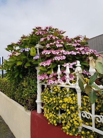 Stella Maris Hotel: Blooming flowers in front by the patio.