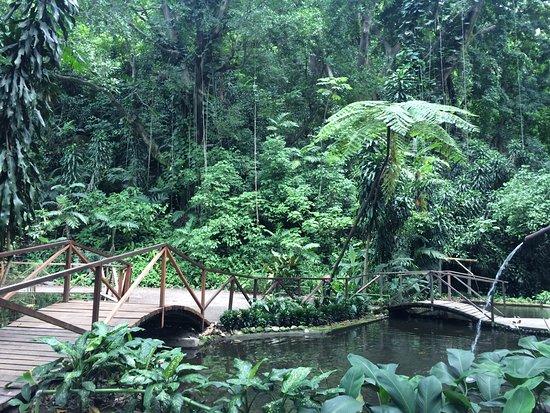 Pozo de los deseos picture of jardin botanico la laguna for Hotel jardin botanico