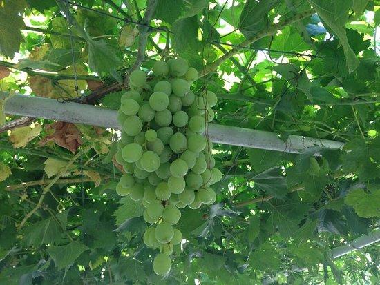 Erimi, Kıbrıs: photo1.jpg