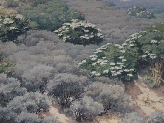 Boswachterij Westerschouwen: duinlandschap Westerschouwen